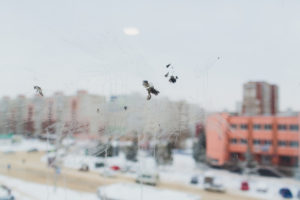 Bird window collision